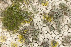 Trocknen Sie gebrochene Erde Gebrochenes Schlammmuster Boden im Sprung lizenzfreies stockbild