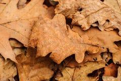 Trocknen Sie gefallene Blätter lizenzfreies stockfoto