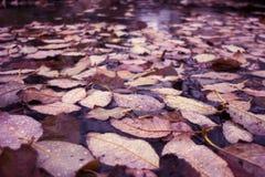 Trocknen Sie gefallene Blätter auf Eis Lizenzfreie Stockbilder