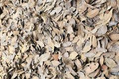 Trocknen Sie gefallene Blätter, luftgetrockneten Ziegelstein rgb Lizenzfreie Stockbilder