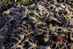 Trocknen Sie gefallene Blätter unter Schnee Stockfotos