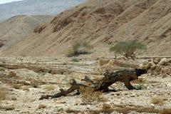 Trocknen Sie gefallenen Baum in einem Tal auf Gebirgshintergrund Wüste Nege Lizenzfreie Stockbilder