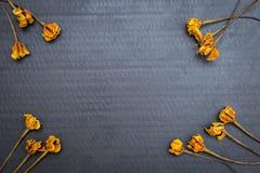 Trocknen Sie gelbe Blume auf schwarzem Papierbeschaffenheitshintergrund Stockfotos
