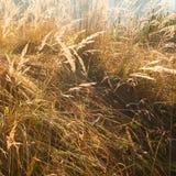 Herbstliche Grasszene Stockfoto