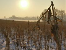Trocknen Sie im Winter lizenzfreies stockfoto