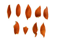 Trocknen Sie orange Schale Lizenzfreies Stockbild