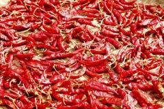 Trocknen Sie Paprikas aus stockfotos