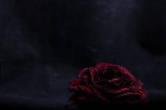 Trocknen Sie Rosafarbenes auf einem schwarzen Hintergrund lizenzfreies stockbild