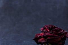 Trocknen Sie Rosafarbenes auf einem schwarzen Hintergrund lizenzfreies stockfoto