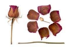 Trocknen Sie Rosafarbenes auf einem weißen Hintergrund Lizenzfreie Stockfotografie