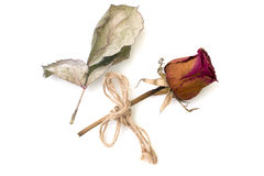 Trocknen Sie Rosafarbenes und Blumenblatt lokalisiert auf einem Weiß Stockfotos