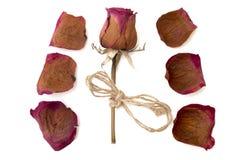 Trocknen Sie rosafarbenes und Blumenblatt lokalisiertes Weiß Stockbilder