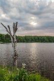 Trocknen Sie saftlosen Baum mit einem See auf dem Hintergrund Stockfoto