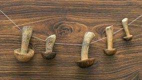 Trocknen und brauner Kappenboletus des Boletus Lizenzfreies Stockfoto