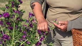 Trocknen von Blumen stock video footage