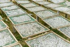 Trocknende Fische in der Sonne lizenzfreie stockfotografie