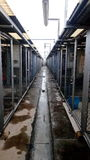 Trocknende Käfige nach Regen Stockbilder