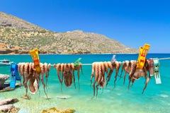 Trocknende Krake bewaffnet in einem Fischereihafen auf Kreta Lizenzfreies Stockfoto