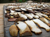 Trocknende Pilze Lizenzfreie Stockfotografie