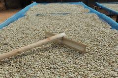 Trocknender Kaffee. lizenzfreie stockfotos