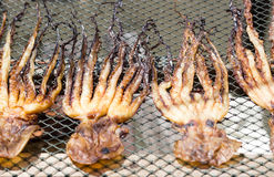 Trocknender Kalmar auf Netz Lizenzfreies Stockfoto
