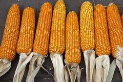 Trocknender Mais lizenzfreie stockbilder