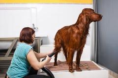Trocknender Pelz des Groomer des Hundes Lizenzfreies Stockfoto