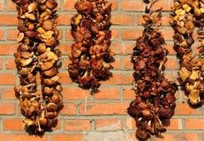 Trocknender Pilz im Sonnenschein Stockfotografie