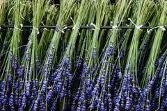 Trocknender Prozess des Lavendels Stockbilder
