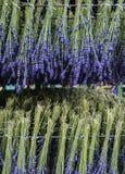 Trocknender Prozess des Lavendels Stockbild