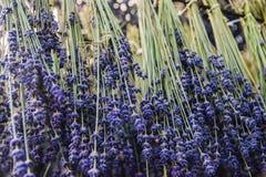 Trocknender Prozess des Lavendels Lizenzfreies Stockbild