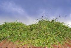 Trocknendes Gras auf dem Dach des Gebäudes Lizenzfreies Stockbild