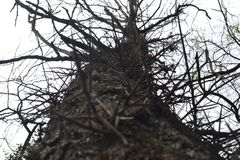 2 trocknete Baum mit den Dornen und den trockenen Niederlassungen mit dem Himmel im Hintergrund Stockbilder