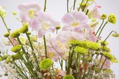 Trocknete Blumen, schön in Handarbeit gemachte, weiße Hintergründe Stockfoto