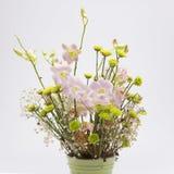 Trocknete Blumen, schön in Handarbeit gemachte, weiße Hintergründe Stockfotos