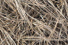 Trodden dry grass Stock Photography