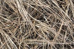 Trodden dry grass Stock Photography