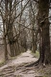 The trodden path in a mysterious mystical place and the tall old trees. The trodden path in a mysterious mystical place among the tall old trees royalty free stock images