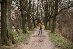 The trodden path in a mysterious mystical place and the tall old trees stock photo