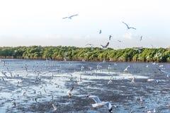 Troep die van vogelszeemeeuw hoog omhoog in de lucht met zijn uitgespreide vleugels vliegen Royalty-vrije Stock Foto's