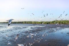 Troep die van vogelszeemeeuw hoog omhoog in de lucht met zijn uitgespreide vleugels vliegen Stock Foto's