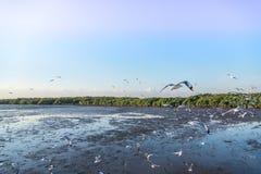 Troep die van vogelszeemeeuw hoog omhoog in de lucht met zijn uitgespreide vleugels vliegen Stock Afbeeldingen