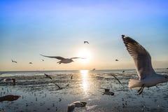 Troep die van vogelszeemeeuw hoog omhoog in de lucht met zijn uitgespreide vleugels vliegen Stock Fotografie
