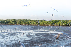 Troep die van vogelszeemeeuw hoog omhoog in de lucht met zijn uitgespreide vleugels vliegen Royalty-vrije Stock Afbeelding