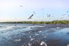 Troep die van vogelszeemeeuw hoog omhoog in de lucht met zijn uitgespreide vleugels vliegen Stock Foto