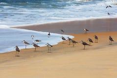 Troep van de strandloper van de Wulp Royalty-vrije Stock Afbeelding
