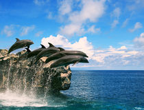 Troep van dolfijn die door zeewater en drijvende medio lucht springen Royalty-vrije Stock Fotografie