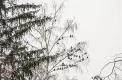 Troep van duiven Royalty-vrije Stock Afbeelding
