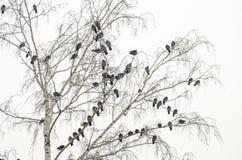 Troep van duiven Royalty-vrije Stock Fotografie