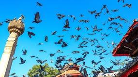 Troep van duiven het vliegen royalty-vrije stock foto's